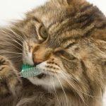 Cura del gatto: GUIDA