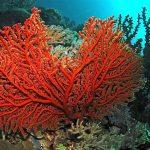 Il ritorno della cernia e del corallo a Portofino
