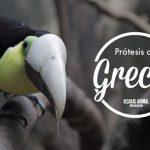 Grecia, il tucano che cambiò il Costa Rica