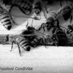 Il tesoro delle api