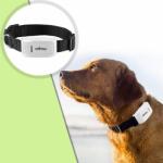 Pet Tracking, come localizzare il vostro cane!