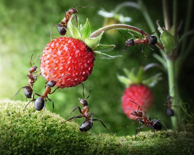 10 Cose che non sapevi sulle formiche