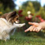Tu e il cane, migliori amici in 3 semplici passi