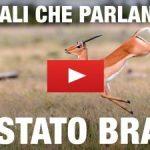 """Animali Che Parlano """"Lo Stato Brado"""" /1"""
