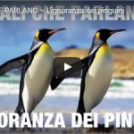 """Animali Che Parlano """"L'ignoranza dei pinguini"""" /2"""