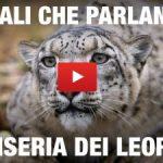 """Animali Che Parlano """"La miseria dei leopardi"""" /3"""