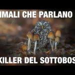 """Animali Che Parlano """" Il killer del sottobosco"""" /4"""