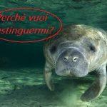 L'uomo e l'estinzione dei grandi animali marini