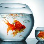 Cura del pesce rosso in poche e semplici mosse