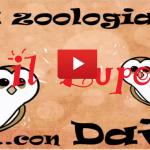 Lupo – Video descrizione di Nicola Ruffino