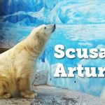Arturo / L'animale più triste del mondo