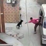 Dognapping / Aumenta il rapimento dei cani in Italia