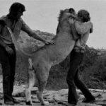 Il leone Christian e la sua fantastica storia