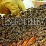 Tesoro delle api / Un bene inestimabile
