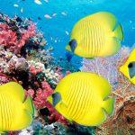 Barriera corallina 3D / Salviamo il mare?
