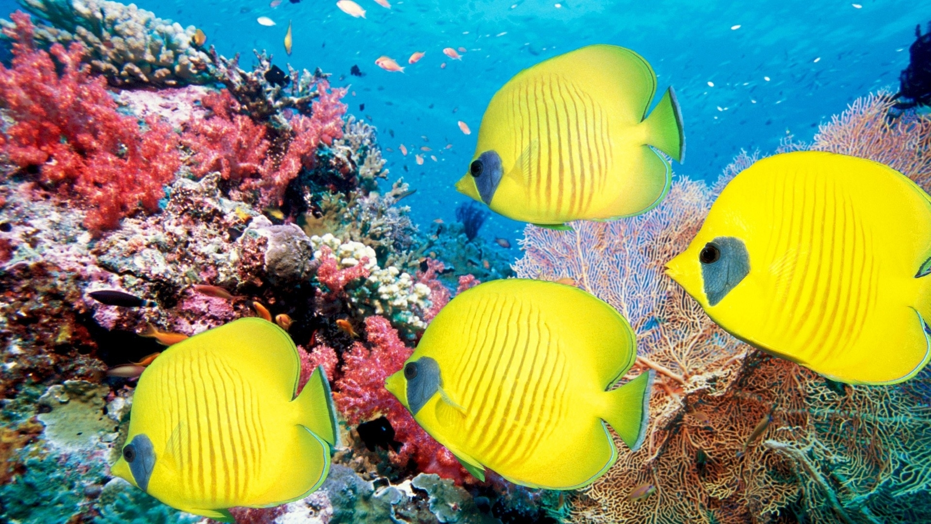 barriera_corallina_coral_reef