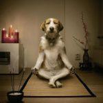 Benessere del cane / La guida pratica