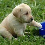 Golosità Canine in arrivo su Passioni Condivise