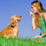 Come educare il cane – Guida #1