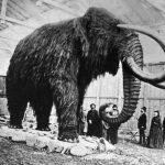Un Mammut in Giardino? Troppo COSTOSO!
