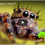 Quanto Mangiano i Ragni?  – Scopriamolo Insieme!