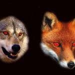 Lupi e Volpi Sono Nocivi? Parliamone un po'!
