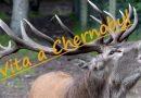 Pullula la vita a Chernobyl – L'Anniversario di un disastro